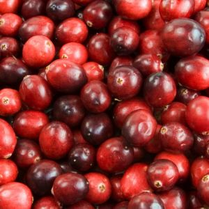 Cranberry / Großfruchtige Moosbeere 'Red Star' / 'Howes'